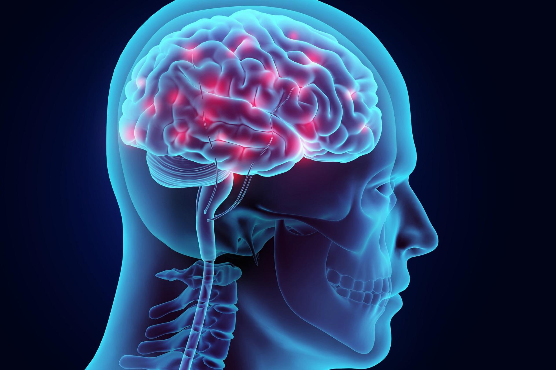 3D illustration brain nervous system active, medical concept.